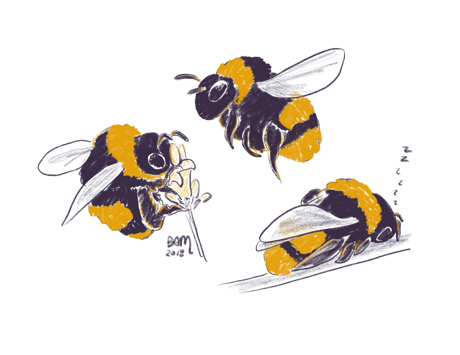 Studies of bumble bees